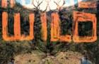 """FaltyDL """"In The Wild"""" (Ninja Tune)"""